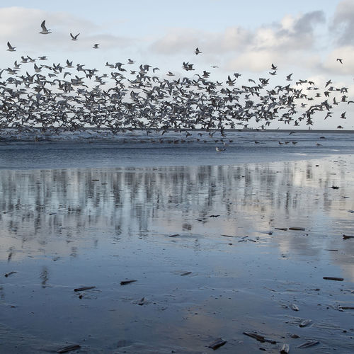 Flights Flock Of Birds Bird And Beach Bird And Beach Scape Bird Reflections In Sea Nature Seascape Sky Beach Water