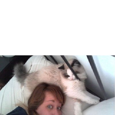 Despertarse con el gato de corona es amor.jajaja Srenrique Gatolicismo Gato Gat cat cama llit bed buenosdias bondia goodmorning wakeup love