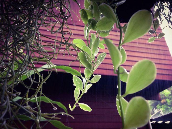 Raindrops Plants Ant Plant Leaves