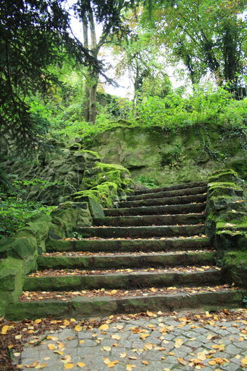Day Growth Hidden Path Nature No People Outdoors Staircase Steps Tree