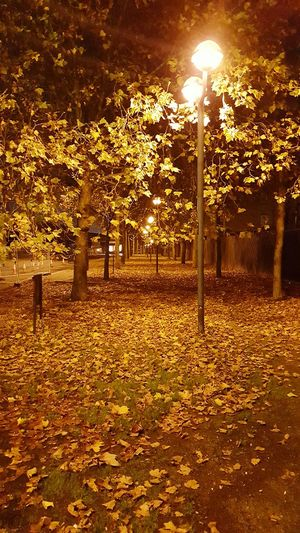 Fallen Leaves Autumn Leaves Autumn Night Path Of Leaves Night City Lonely Street Night Street