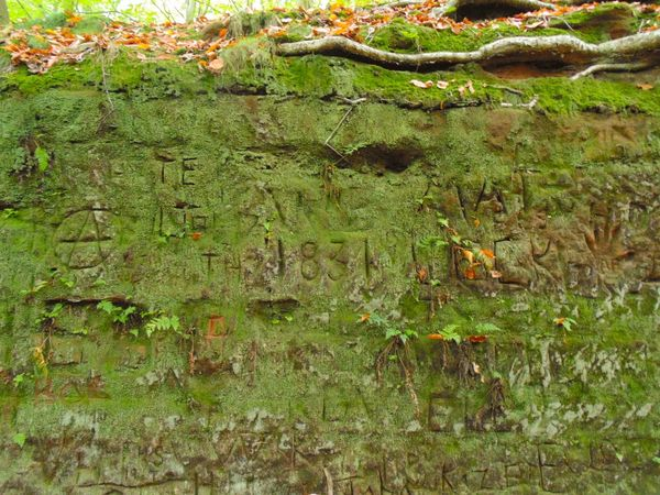 Gaffiti Aged Stone Green Color Creativity Grass No People Growth Backgrounds Day Outdoors Nature Close-up Sandstone Cliffs Sandstone Etching Carved In Stone Beauty In Nature