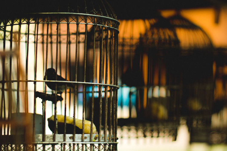 Bird Birdcage Caged Illuminated Shillouette Thailand Rural Spotted In Thailand
