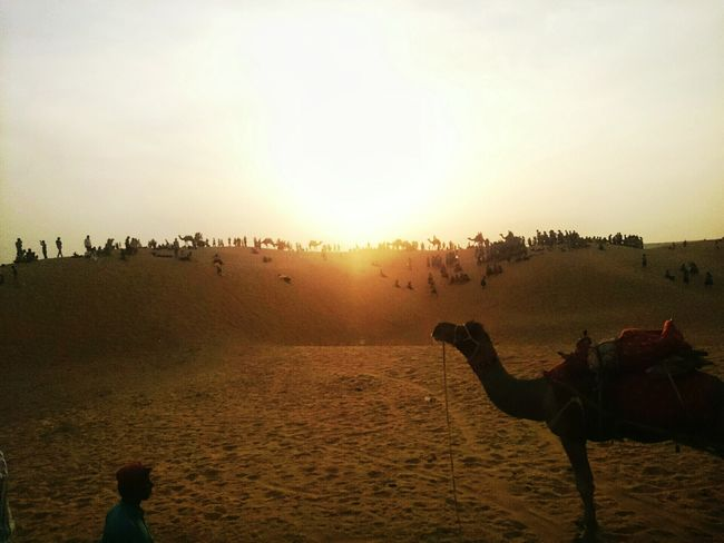 Sunset Sky Landscape Camel Camel Riding Camel Ride Rajasthan Samsanddunes Desert Desert Life Traditional Culture Royal Sunset Large Group Of People Full Length Nature Outdoors People Large Group Of Animals Sun Togetherness Sky Adults Only Adult Day The ship of deserts 🏜 with its captain