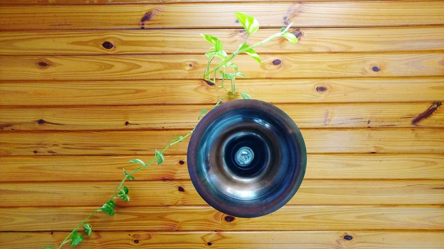 Techo Lampara Madera Machimbre Planta Fine Art Photography EyeEm Gallery Fine Art
