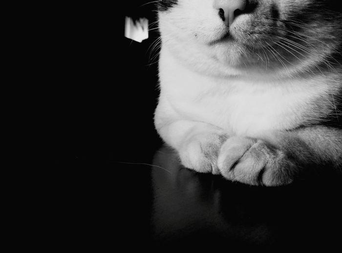 Cut Cat Cat Content