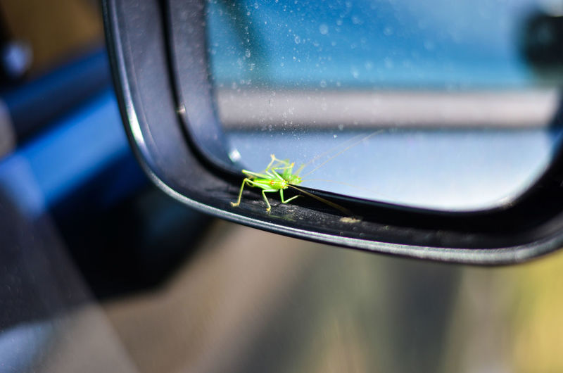 Close-up of insect on side-view mirror