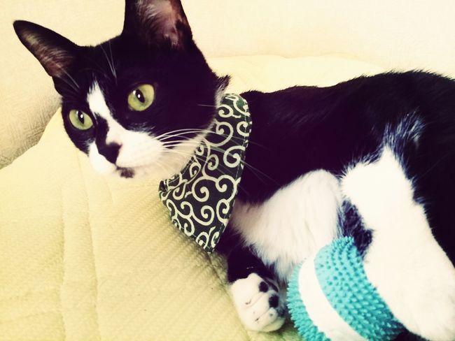 おはぎさん Cat Lovers Cat Pretty