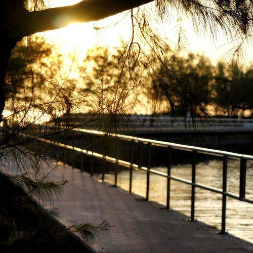 เดินหาสิ่งใหม่ๆ Traval With Friends Holiday Trip Thailandstyle Phetburi Sunrise Sunrise_sunsets_aroundworld Tree At Thailand Light And Shadow