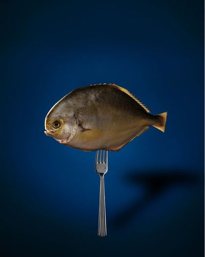 Fish on Fork Animal Fin Animal Themes Animal Wildlife Close-up Composite Image Day Fish Full Length Nature No People One Animal Outdoors Sea Sea Life Studio Shot Underwater Water