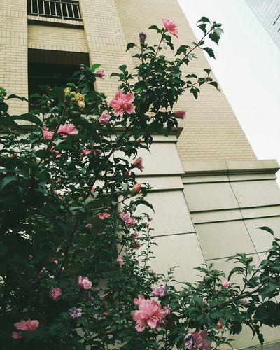 蔷薇 Flower Natural Beauty