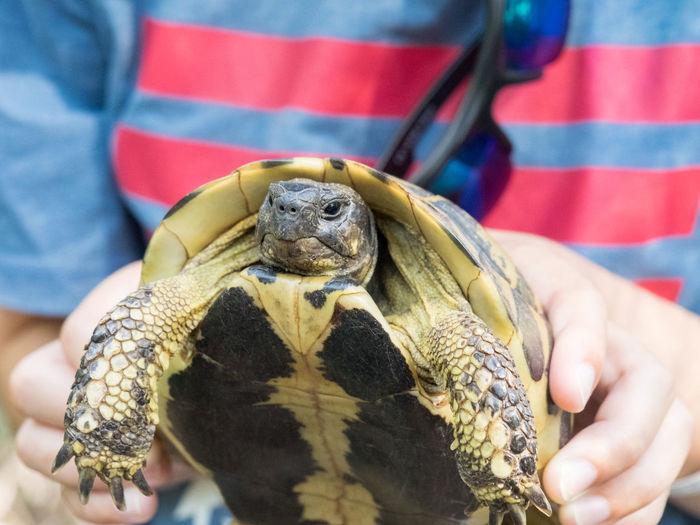 Wild turtle,