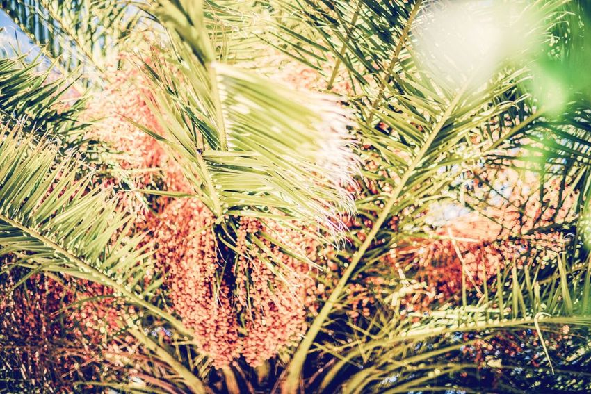 Open Edit Palm Trees Summer Sun Enjoying Life Light Color Explosion Traveling Urban 4 Filter Coral By Motorola