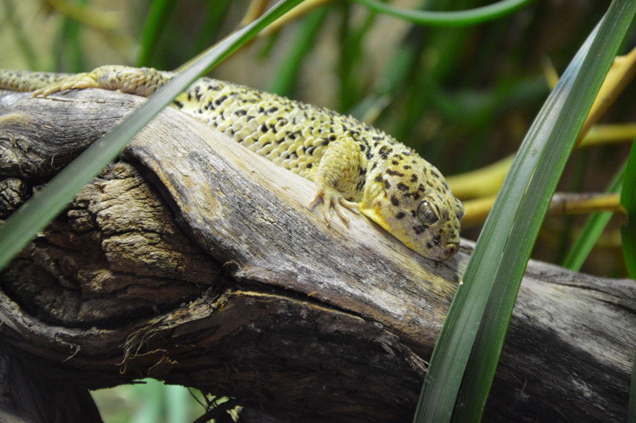 Close-Up Of Lizard On Stem