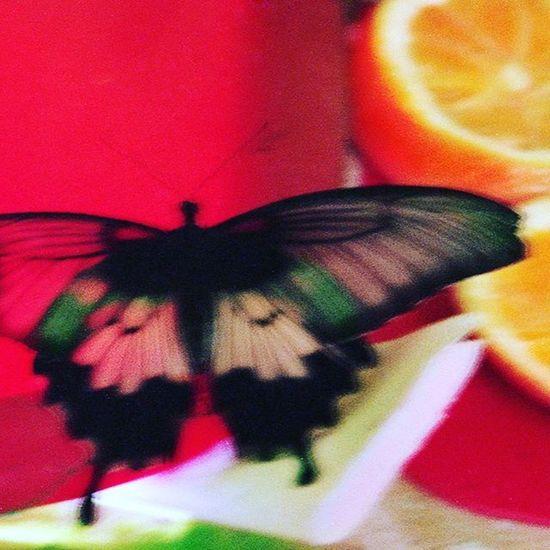 цветныекартинки Film Filmfoto Analog Analogphotography 35mm Decor Design Butterfly фото 45*45 см украшение любого интерьера