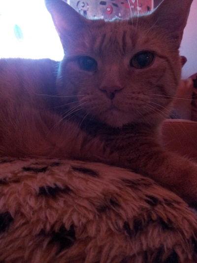 Meine Süße Katze Mauzi ♡♡♡♡♥♥♥