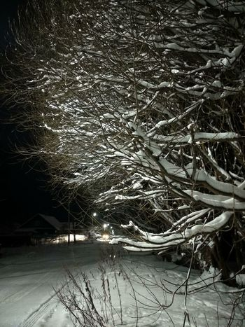 winter branches Night Road Snow ❄ Branches And Snow Winter Snow Cold Temperature Outdoors Nature Complexity Tree No People Frozen Beauty In Nature