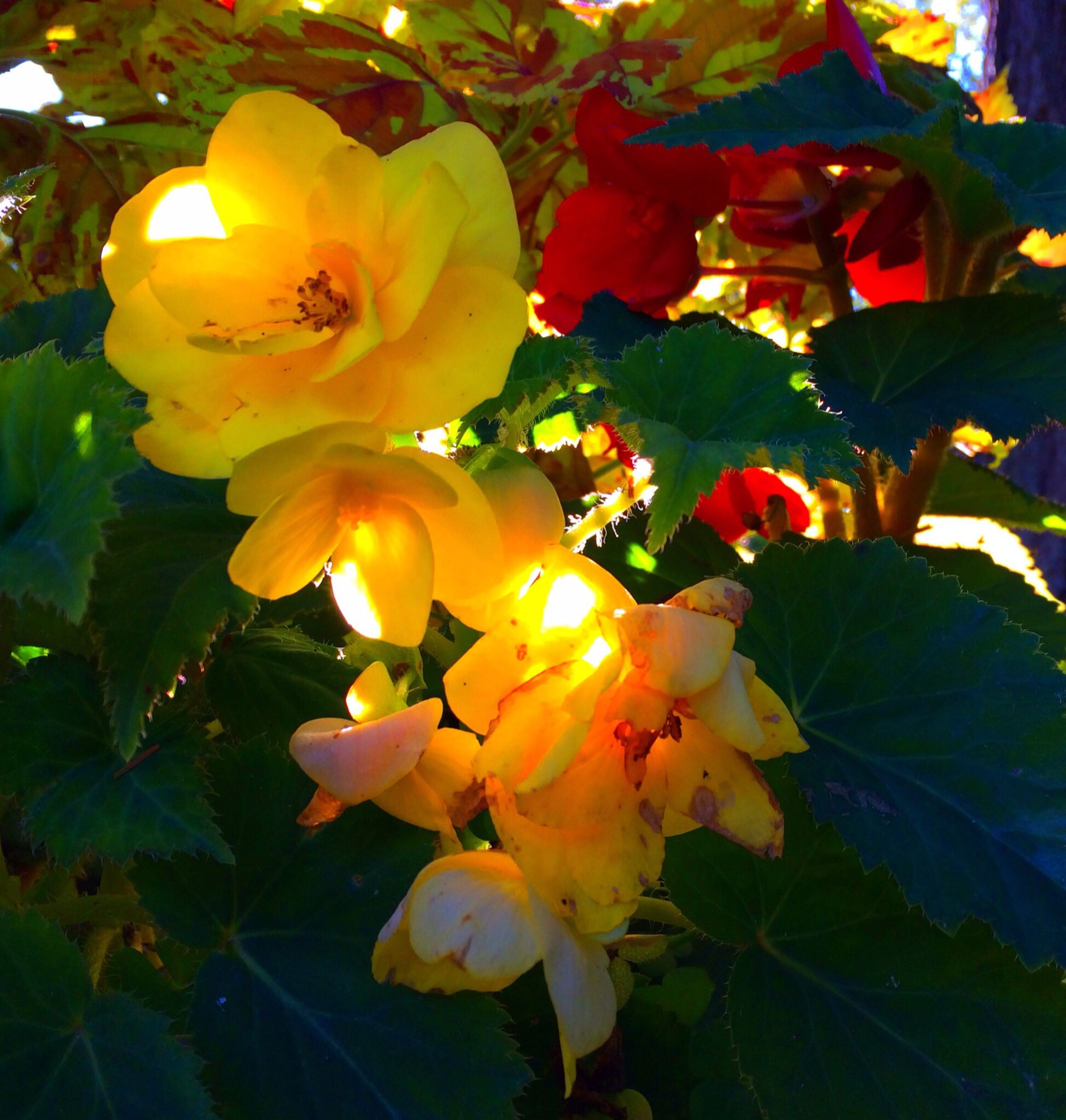 flower, petal, freshness, fragility, growth, flower head, beauty in nature, leaf, yellow, blooming, plant, nature, close-up, in bloom, blossom, low angle view, sunlight, no people, day, focus on foreground
