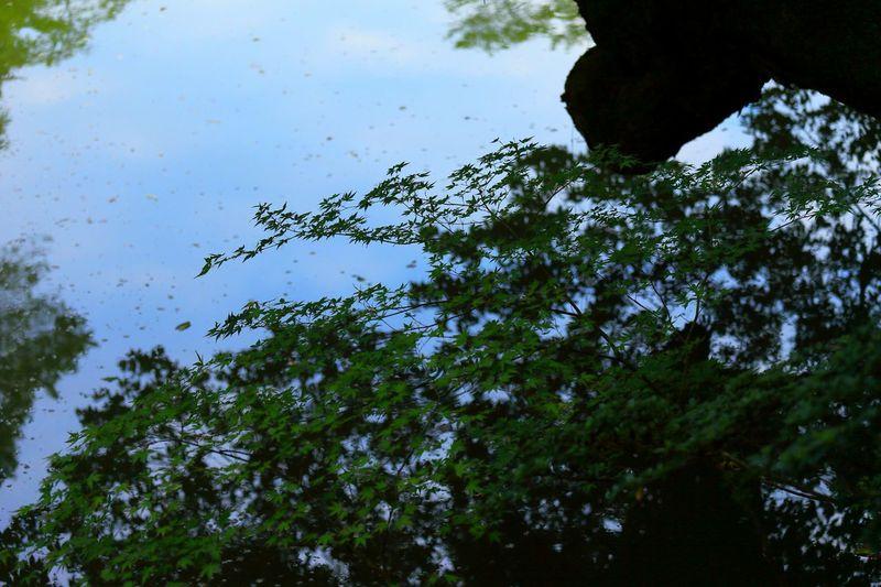 ツツジを見に行ったのに……池!σ(^◇^;) Trees Taking Photos Enjoying Life Pond Ponds Tree_collection  Water_collection Silhouette シルエット部 Tree Silhouette