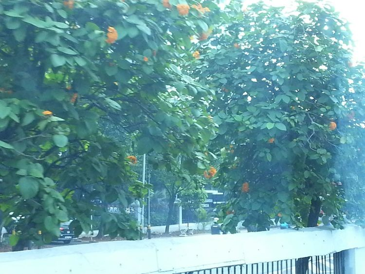 Taken Through A Moving Bus Window INDONESIA Orange Flower