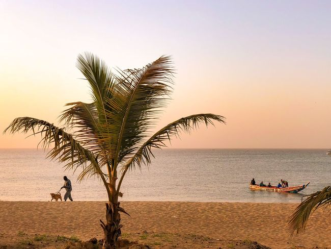 Sea Palm Tree Beach Water Sand Sunset Horizon Over Water Nature Clear Sky Sky Men Tree Outdoors Beauty In Nature