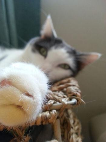 Cat Lovers Cat♡ Cat Model