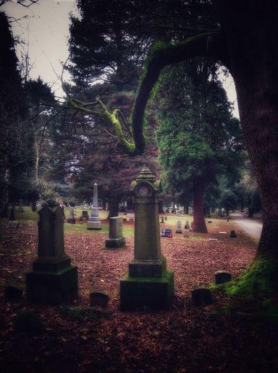 Winter Cemetery