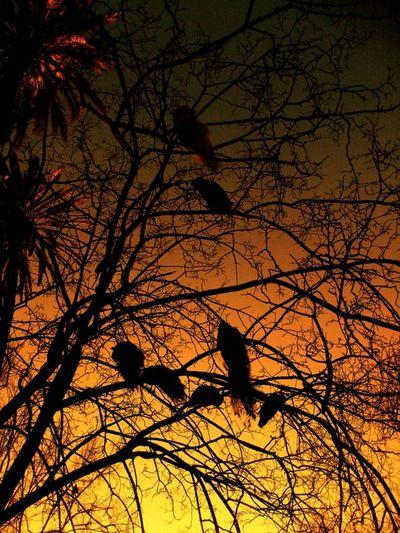 Walking Around Sunset Nature Landscape Taking Photos Colors