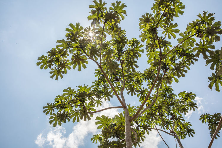 Low angle view of leaves against sky on sunny day