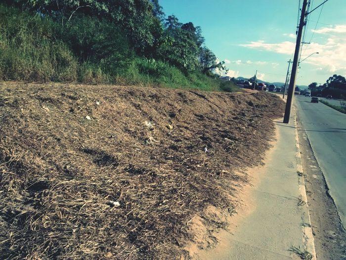 Post Mortem Dead Debris Urban Landscape