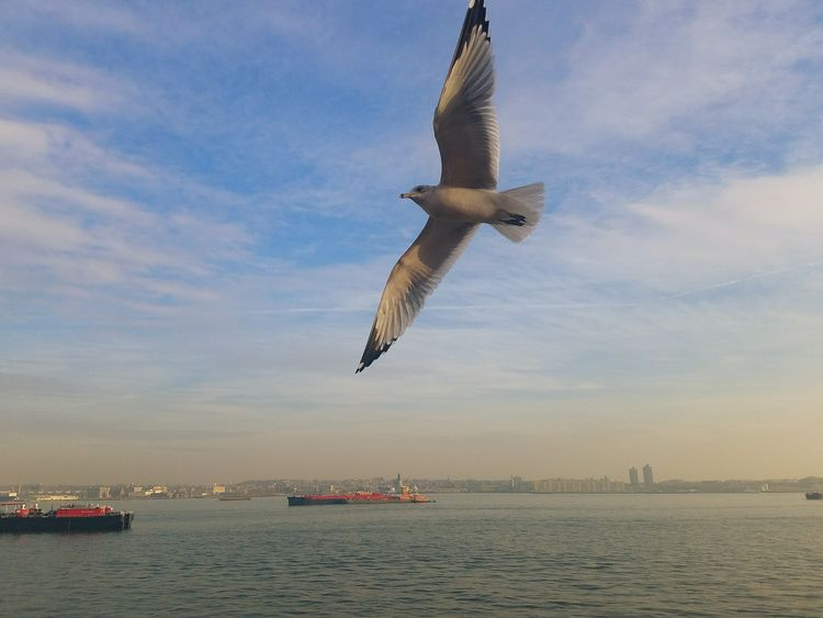 Gorgeous capture of a fast moving seagul! Flying Sky Cloud - Sky Outdoors Sea Nature City Sunset Bird