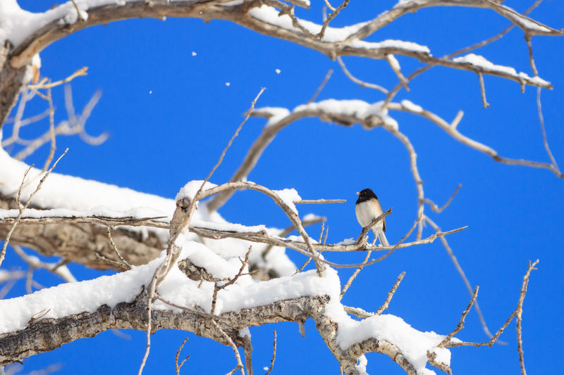 Low Angle View Of Bird Perching On Bare Tree Against Blue Sky