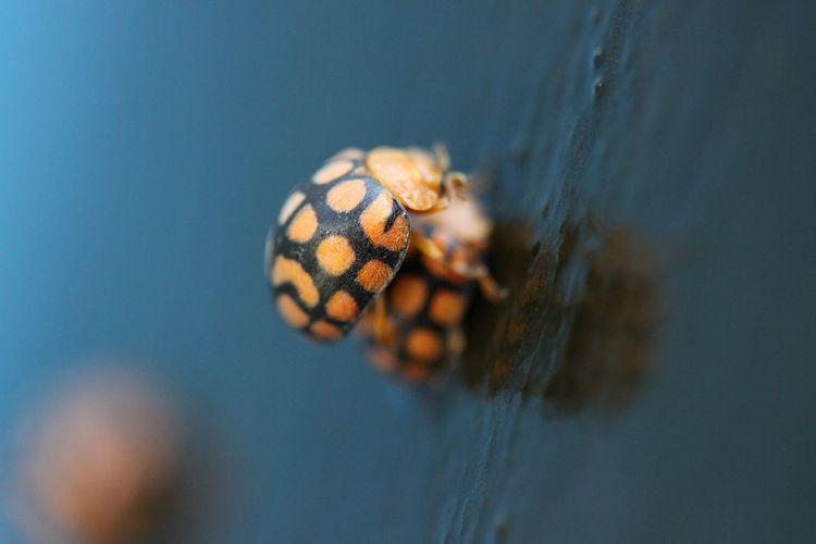 Tilt shot of ladybugs mating on wet floor