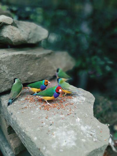 Birds of sochi park