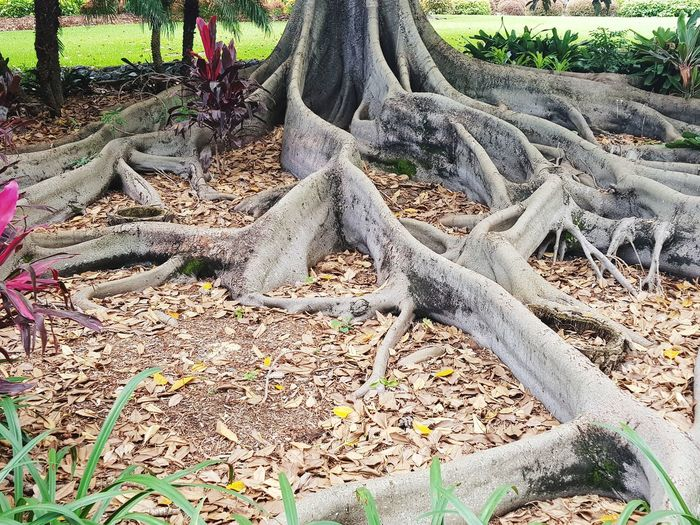 Close-up of tree roots on field