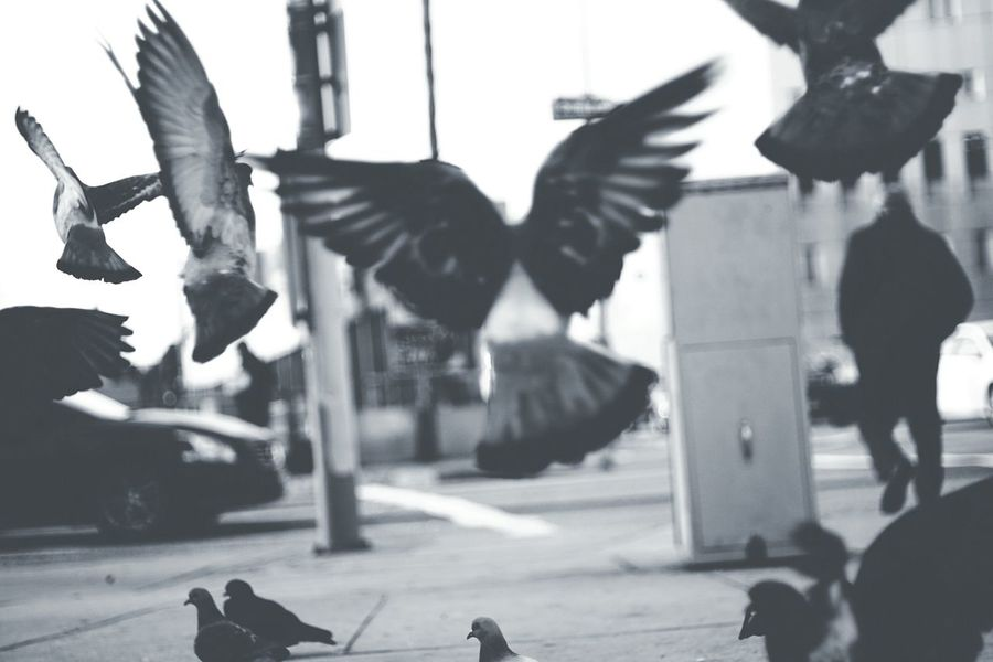 Flying Rats Pigeons Streetphotography Streetphoto_bw Monochrome Urban Landscape Urban Nature Taking Photos Hanging Out Street Action