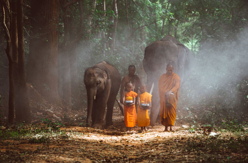 Full length of monks walking with elephant in forest