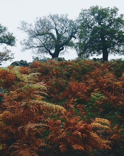 Moorland aesthetic English Moors Vscofolk Kinfolk Outdoorsy Moorland Travelgram Igtravel Prehistoric Folgiage Neverstopexploring  ExploreEverything Exploretocreate Orange Autumn Rainy Aesthetic SELFAWARE Stupid Hipster Myleicester Mystical Trees Forest