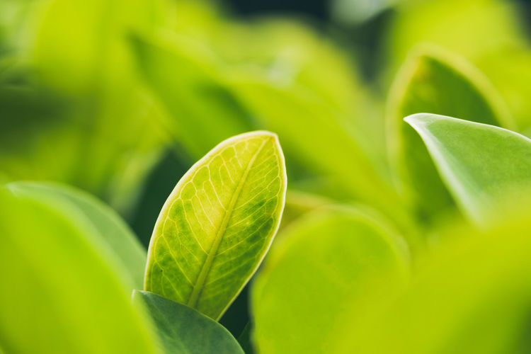 Copy Space Wallpaper Greenery Nature Nature_collection Leaf Vein Leaves Dew Natural Pattern Focus Blade Of Grass Bud Plant Life Botany Cultivated Abstract Backgrounds Stamen New Life Lush Foliage In Bloom Stem Change Pistil Sepal