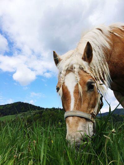 Close-Up Of Horse Grazing On Grassland