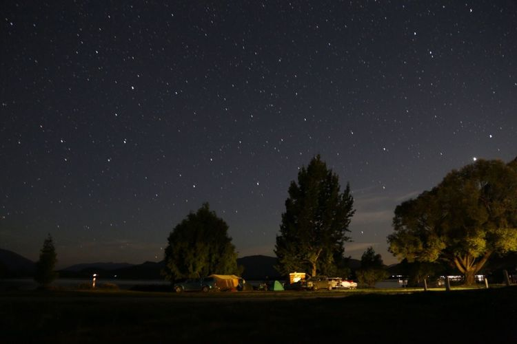 Kiwi Tree Night Sky Star - Space Star Field Beauty In Nature Nature Outdoors Galaxy Camping Tent New Zealand Beauty New Zealand