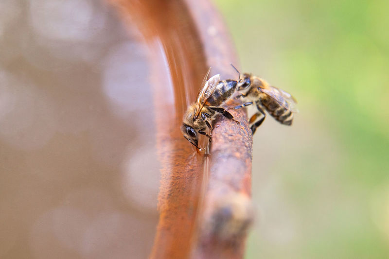 Close-up of bees on metal