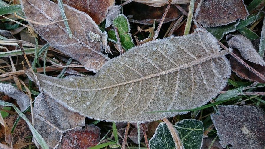 Frozen leaf Outdoors No People Nature Leaf Leaves Frozen Frozen Nature