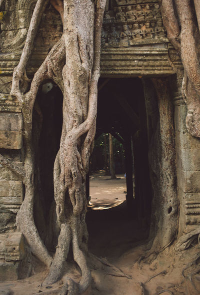 Siem Reap Cambodia Angkor Architecture The Past History Built Structure Arch No People Ancient Building Travel Destinations Nature Tree Old Day Outdoors Tourism Travel Place Of Worship Architectural Column Religion Building Exterior Ancient Civilization