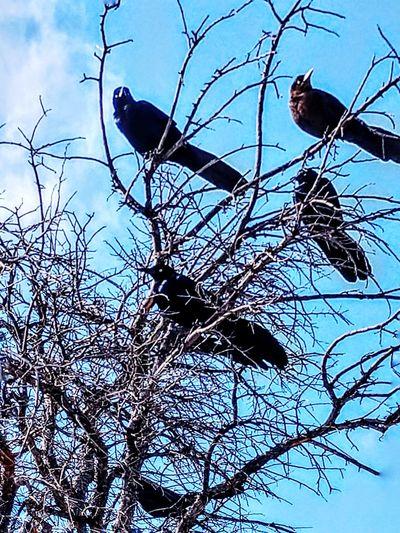 sunbathing birds Wintertime Thebirds Bird Of Prey Perching Tree Bare Tree Animal Themes Close-up Raven - Bird Blackbird