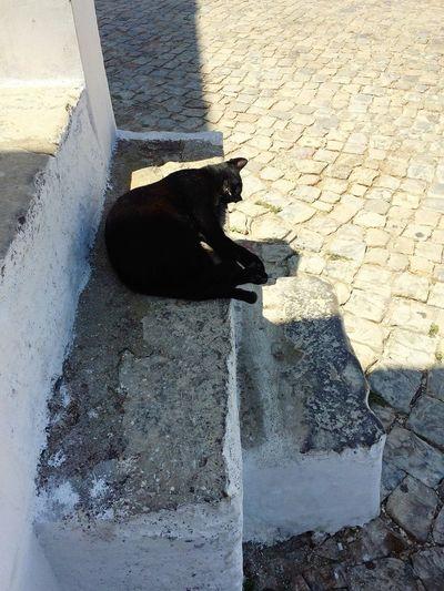 Black Cat Cacela Velha Portugal Cat Day Ground Portuguese Pavement Sunny☀ White Village