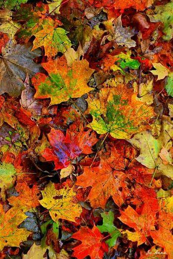 Hello Autumn ~ Autumn Colors EyeEm Nature Lover Nature Lover Nature Woods And Color Woods Autumn Leafs Autumn Colours Nature Colors Color Leafs
