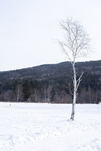 Snow Tree Cold Temperature Winter Bare Tree Scenics - Nature Land Environment Landscape Tranquil Scene Plant Beauty In Nature Field No People Tranquility Sky Nature Day Non-urban Scene Outdoors Snowing Isolated Blizzard