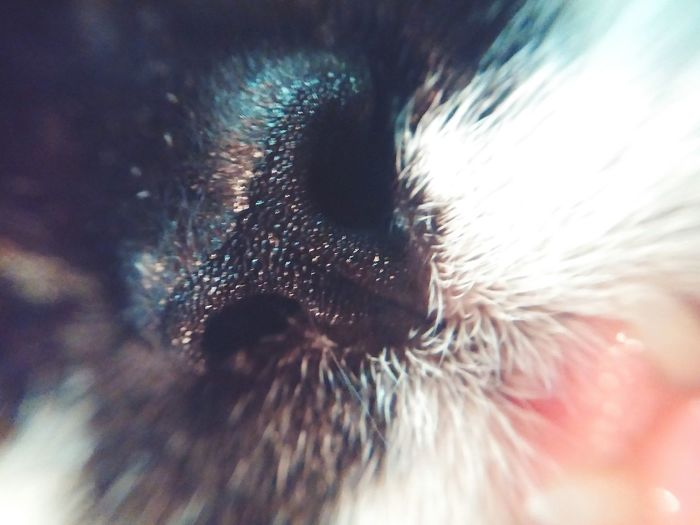 Cat EyeEm Best