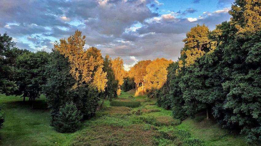 Tree Sky Cloud - Sky Landscape Green Color